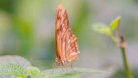 Butterfly. Beautiful butterfly sitting on a leaf royalty free stock photos