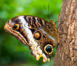 Butterfly. A beautiful butterfly sitting on a tree Stock Image