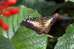 Tropical butterfly in its natural habitat. stock images