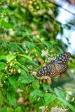 Butterfly. Beautiful views thai Royalty Free Stock Photos