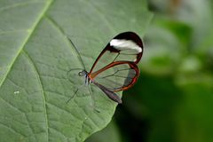 Butterfly. Beautiful butterfly world Royalty Free Stock Photography