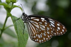 Butterfly. Beautiful butterfly world Stock Images
