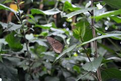 Butterfly. Beautiful butterfly world Royalty Free Stock Photos