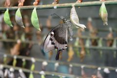 Butterfly. Beautiful butterfly world Royalty Free Stock Photo