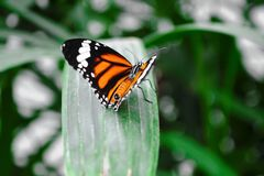 Butterfly. Beautiful butterfly world Stock Photography