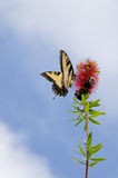 Butterfly and Bees Royalty Free Stock Images