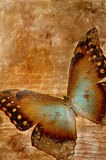 Butterfly on beige Royalty Free Stock Image