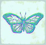 Butterfly with big blue wings Stock Photo
