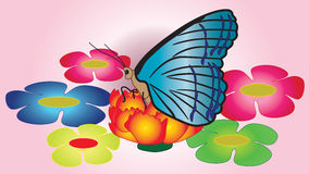 Butterfly with big blue wings sitting on a flower. Stock Photos