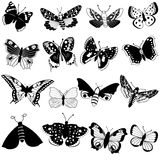 Butterfly black collection vector illustration