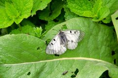 Butterfly with black dots on the wings. stock photos
