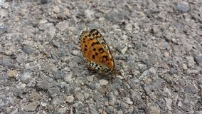 Butterfly. Black and orange butterfly on gray asphalt royalty free stock images
