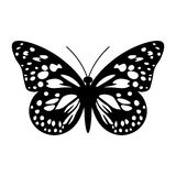 Butterfly in Black and White Stock Photography