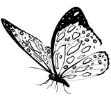 Butterfly black and white isolated on white background, vector insect, monochrome illustration, coloring book, banner, card, poste Royalty Free Stock Image
