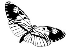 Butterfly black and white isolated on white background, vector insect, monochrome illustration, coloring book, banner, card, poste Royalty Free Stock Photo