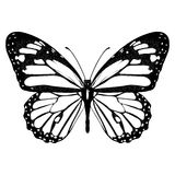 Butterfly black and white, view from above, isolated on white background, vector insect, monochrome illustration, coloring book, b. Anner, card, poster, flyer vector illustration