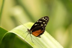 Butterfly with black and yellow and orange wings royalty free stock photos