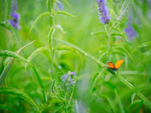 Butterfly on a blade of flower in spring Stock Images