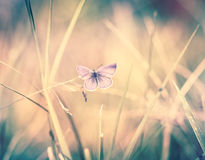 Butterfly on the blade of grass Royalty Free Stock Images