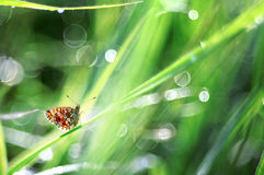 Butterfly on a blade of grass dew freshness Royalty Free Stock Photography