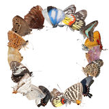 Butterfly blank frame background Royalty Free Stock Photos
