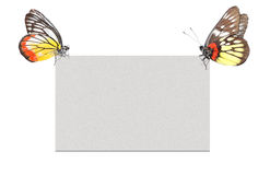 Butterfly blank poster background Stock Images