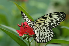 Butterfly on Bloom Royalty Free Stock Photo