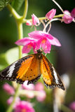 Butterfly and blooms Stock Photos