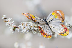 Butterfly on blossom royalty free stock image