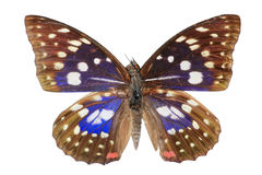 Butterfly blue stock photos