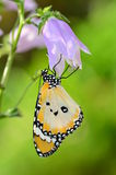 Butterfly on Blue bell flowers Stock Image