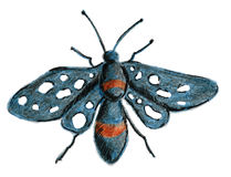 The butterfly is blue-black with white spots on its wings. Sketch with colored pencils from hand. Raster image Royalty Free Stock Photo
