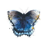 Butterfly blue color insect watercolor painting illustration isolated on white background Stock Images