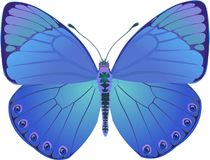 Butterfly blue fantasy Royalty Free Stock Photography