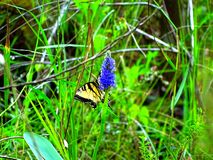 Butterfly and blue flower