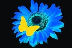 Butterfly and blue flower. A single illustrated yellow butterfly and blue sunflower stock photo