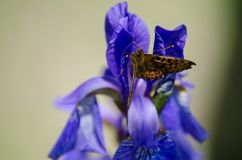 Butterfly on a blue flower in the garden. royalty free stock photos