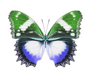 Butterfly blue green Royalty Free Stock Image