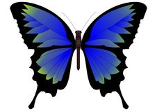 Butterfly in blue-green design Royalty Free Stock Photography