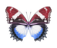 Butterfly blue red royalty free stock images