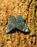 Butterfly. Blue and red Butterfly  standing alone Royalty Free Stock Photography