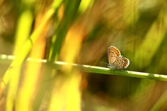 Butterfly. A blue butterfly on a summer day royalty free stock images
