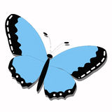 Butterfly. Blue butterfly on white background Stock Photo