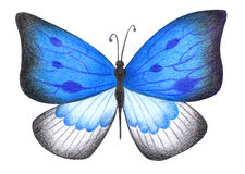 Butterfly with blue-and-white wings drawn with colored pencils Royalty Free Stock Photo