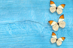 Butterfly on the blue wooden background Stock Photography