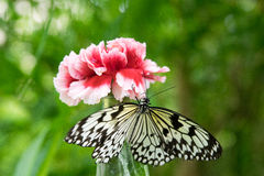 The Butterfly. A butterfly on a BLUETTE Royalty Free Stock Photos
