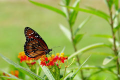 Butterfly on Blurred Background Stock Photo