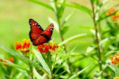 Butterfly on blurred background Royalty Free Stock Photo