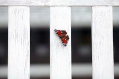 Butterfly on board Stock Photo