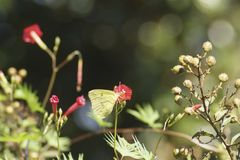Butterfly Bokeh Stock Photography